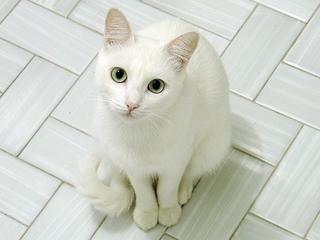 白猫の~1.JPG